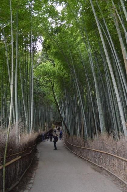 la foresta di bambù