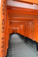 i torii al Fushimi Inari