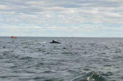 Whale-watching nel San Lorenzo